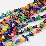 Natural Freshwater Shell Beads Strands, Dyed, Chips, Colorful, 7-15mm; about 32inches/strand