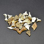 Natural Yellow Shell Nuggets Beads, Goldenrod, 9~20x7~9x1~2mm, Hole: 1mm; about 1980pcs/500g