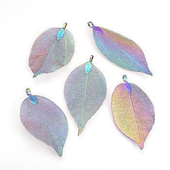 Electroplated Natural Leaf Big Pendants, with Iron Findings, Multi-color Plated, 50~80x20~35x1mm, Hole: 3x6mm