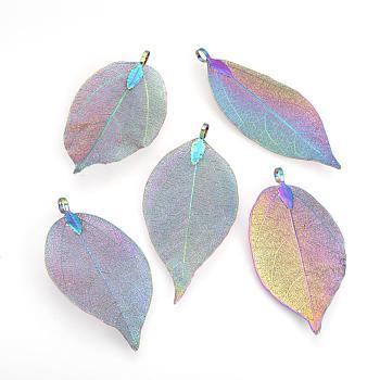 Gros pendentifs de feuille naturelle galvanisés, avec les accessoires en fer, multi-couleur plaquée, 50~80x20~35x1mm, Trou: 3x6mm